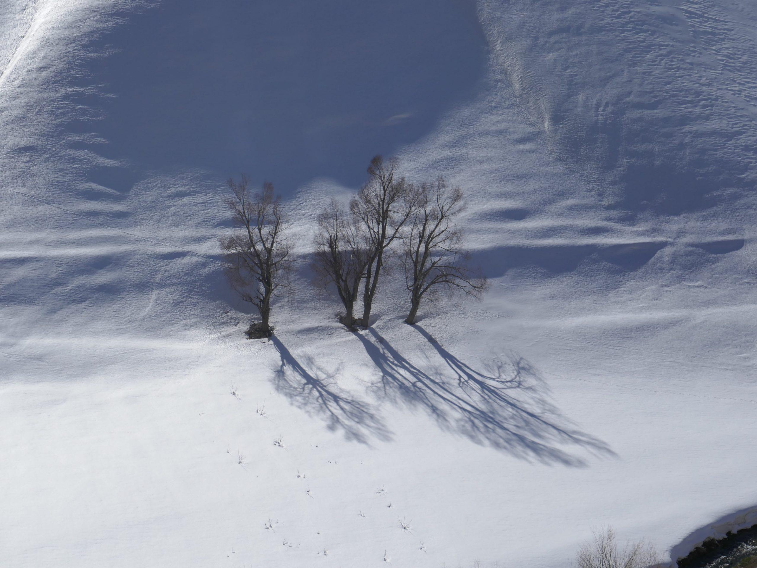 neige et arbres