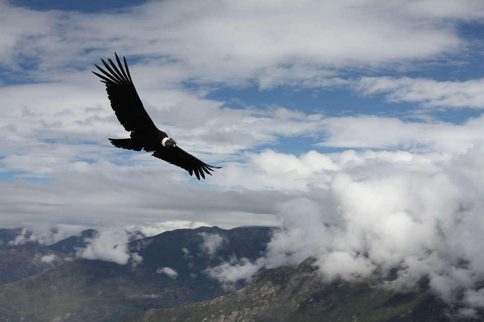 Article – Débordement d'émotions : politique de l'autruche ou du condor des Andes ?
